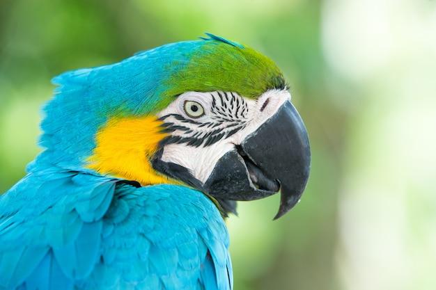 Bellissimo ritratto di uccello pappagallo