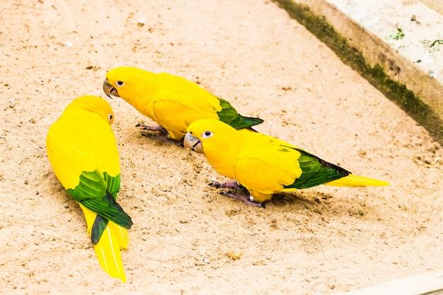 Bellissimo pappagallo, cono solare
