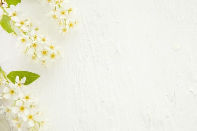 Bellissimo bordo floreale pastello con ciliegio di uccello bellissimo sfondo sfocato. profondità di campo ridotta. sfondo bianco finto con fiori