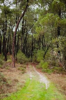 Bellissimo sentiero nella foresta