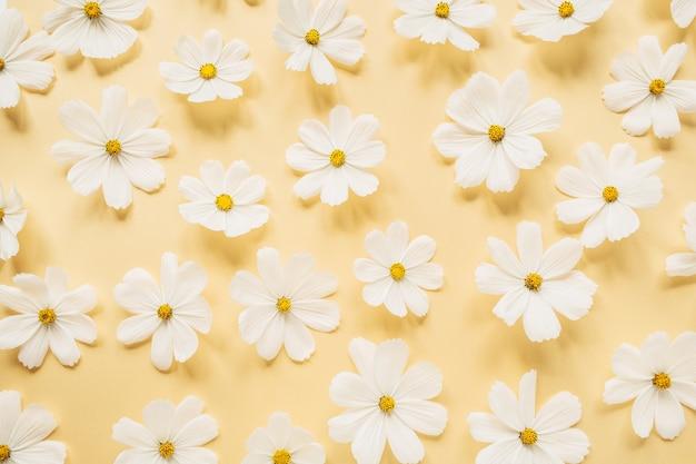 Un bel motivo con camomilla bianca, fiori di margherite su un giallo pallido