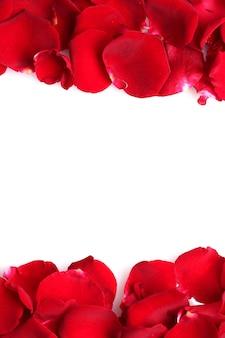 Bellissimi petali di rose rosse isolati su bianco