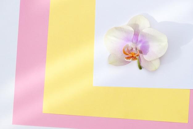 Bellissimi fiori di orchidea phalaenopsis su sfondo rosa pastello vista dall'alto piatto laici. copia spazio. carta di fiori per donna, ragazza, moglie.