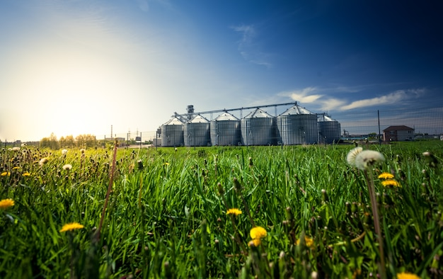 Bella foto di silos del grano nel prato al tramonto