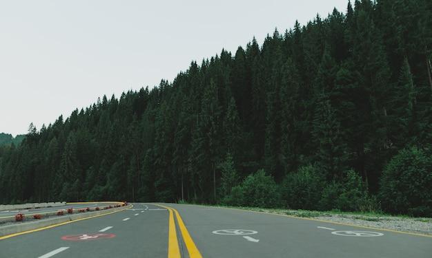 Bella immagine della strada asfaltata nella foresta di conifere di montagna la sera