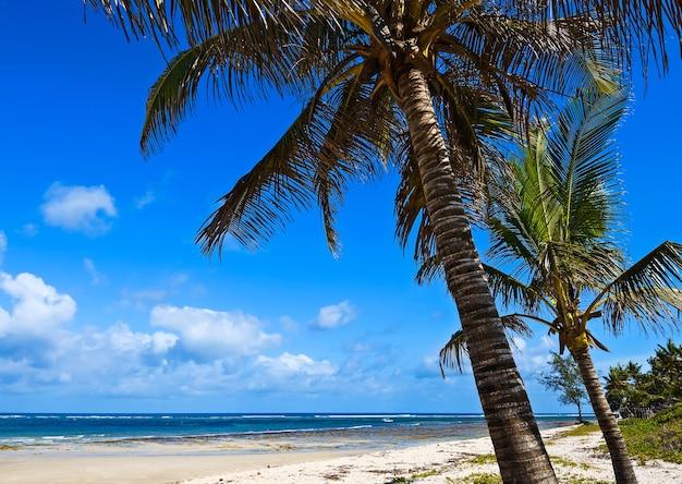 Bellissima e pittoresca costa africana diani in kenya