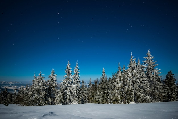 Bellissimo paesaggio pittoresco di abeti alti e snelli coperti di neve che cresce su una collina tra i cumuli di neve in una gelida notte stellata d'inverno. concetto di godersi la natura