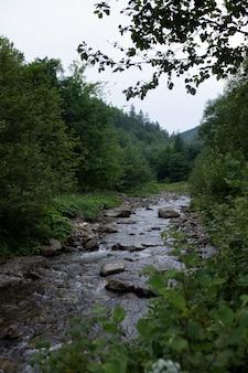 Bellissimo fiume pittoresco nel mezzo della foresta
