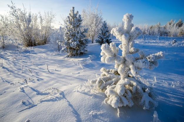 Bellissimo albero di pino nella decorazione della neve luminosa giornata di sole