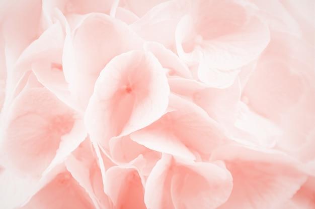 Bellissimi fiori di ortensia o ortensia corallo rosa, macro