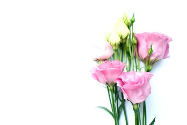 Bellissimi fiori di eustoma rosa (lisianthus) in piena fioritura con foglie di boccioli. mazzo di fiori su sfondo bianco. copia spazio