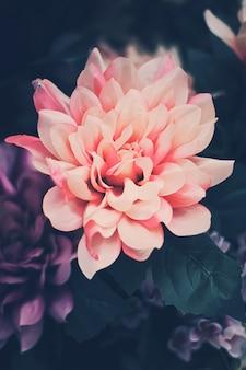 Bello primo piano rosa di disposizione dei fiori