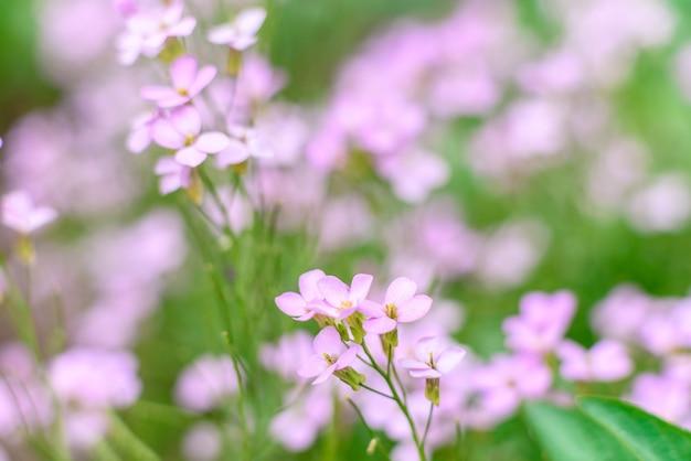 Bellissimi fiori rosa contro piante verdi nel giardino primaverile.