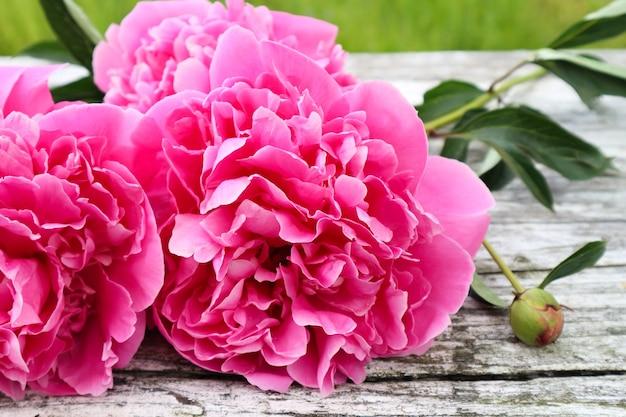 Bellissimi fiori di peonia rosa su fondo di legno bianco