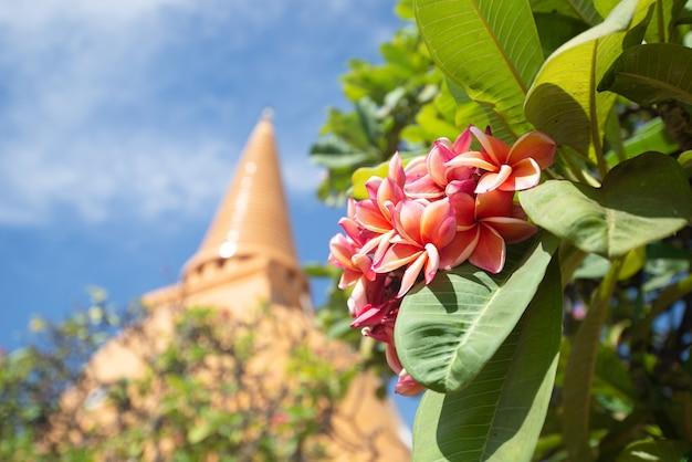 Bellissimi fiori di plumeria rosa con sfondo pagoda. credere, cultura, tradizionale. credo e merito buddhista. concetto di calma e meditazione.