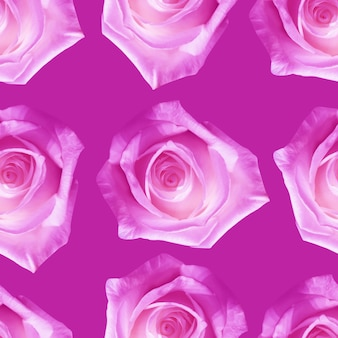 Bellissimi fiori di rosa rosa. reticolo senza giunte di fioritura delle rose. sfondo naturale floreale.