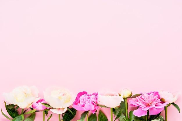 Belle peonie rosa e bianche su sfondo rosa.
