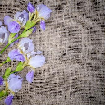 Bellissimi fiori viola iris su una tela grigia