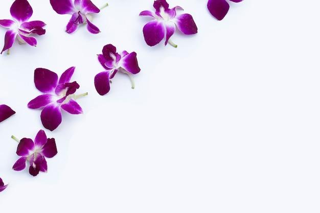 Bellissimi fiori di orchidea viola su sfondo bianco.