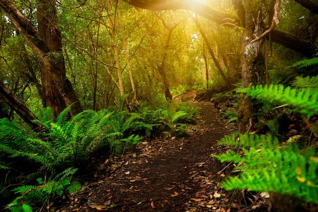 Bella giungla della foresta pluviale in tasmania, australia