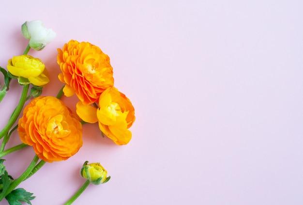 Bellissimi fiori di ranuncolo. fiori di ranuncolo arancione. vista piana laico e dall'alto.