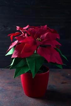 Bella stella di natale rossa del fiore di natale su un fondo di legno scuro con luce profonda