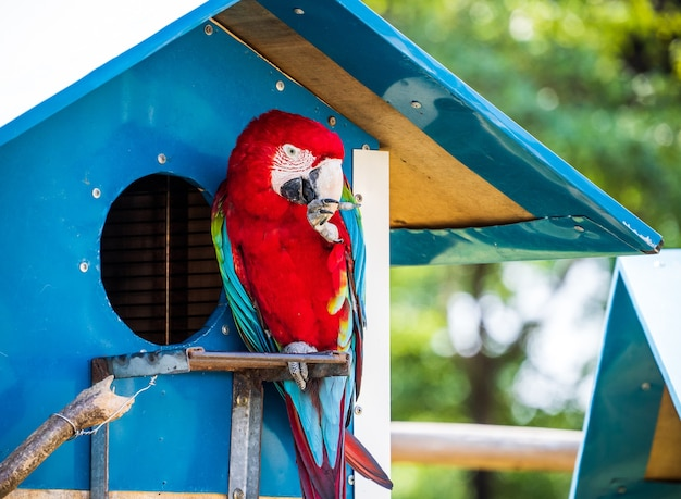 Bellissimi are rossi e verdi e ara blu e gialla che giocano nello zoo, tainan, taiwan, immagine ravvicinata