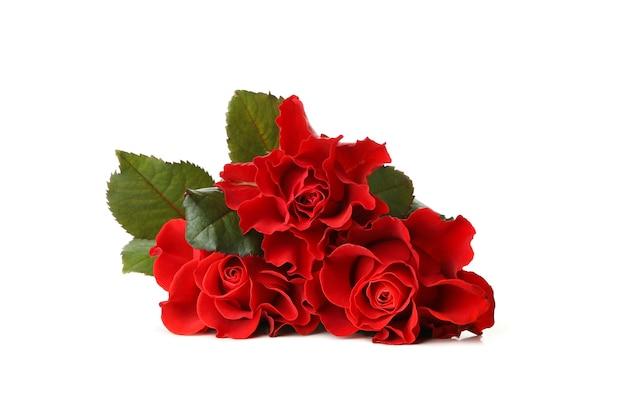 Belle rose rosse isolate su priorità bassa bianca