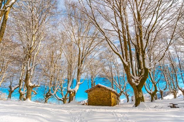 Bellissimo rifugio tra alberi giganti nel parco naturale di oianleku nella città di oiartzun vicino a penas de aya, gipuzkoa. paese basco