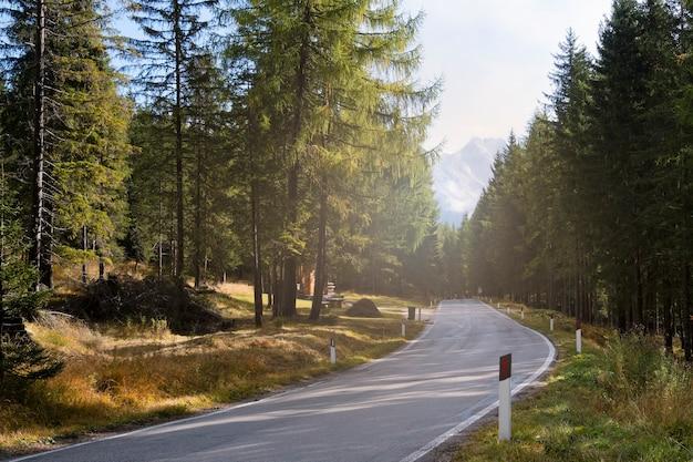 Bella strada per la montagna con il pino al mattino.
