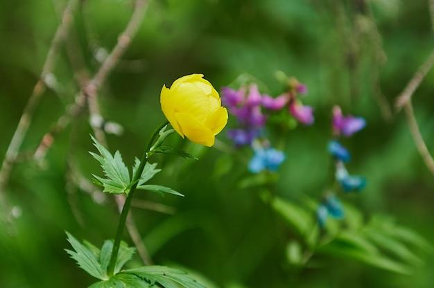 Bellissimi fiori lungo la strada, diversità della natura
