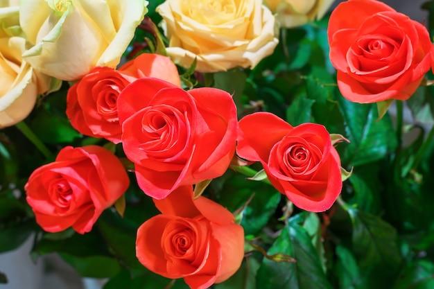 Bellissime rose in vendita presso un fioraio.