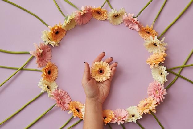 Bella cornice rotonda di diversi fiori di gerbera su uno sfondo rosa. una mano femminile tiene una gerbera di fiori. concetto di festa della mamma con spazio di copia