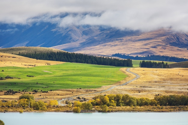 Bellissimo paesaggio rurale della nuova zelanda - verdi colline e alberi