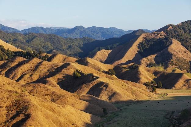 Bellissimo paesaggio rurale della nuova zelanda all'alba
