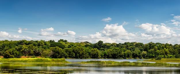 Bella scena rurale con foresta e stagno su sfondo blu cielo