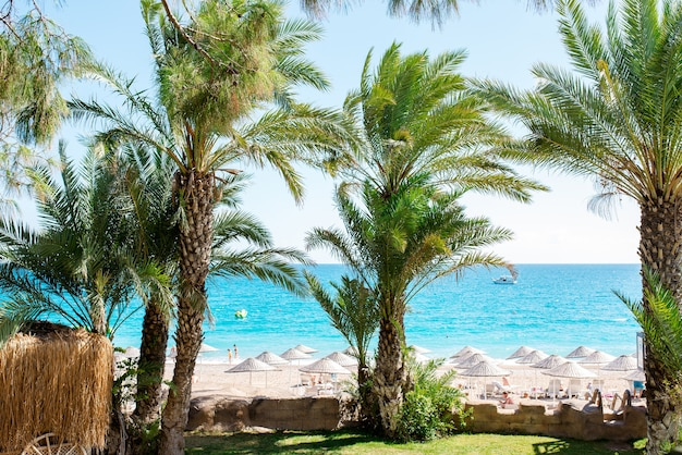 Uno splendido scenario in vacanza con alberi ad alto fusto