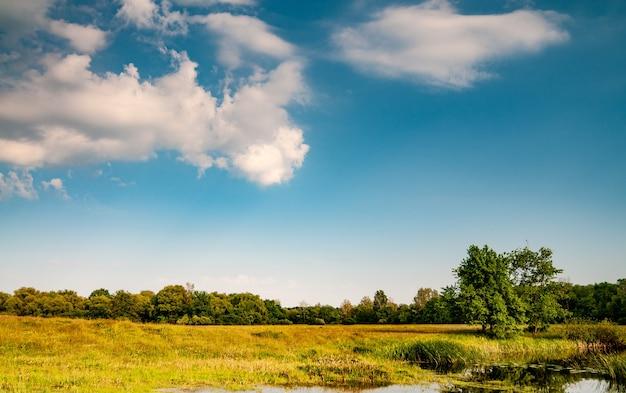 Bellissimo paesaggio panoramico del campo verde con erba di alberi e limpido lago in una calda giornata estiva di sole
