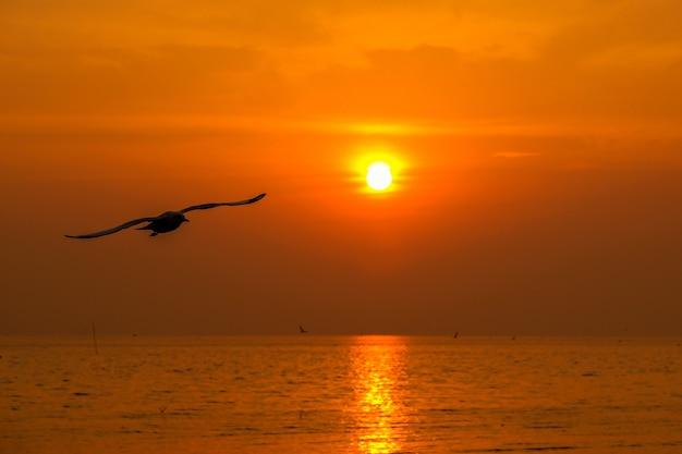 Bellissimo gabbiano e mare con tramonto.