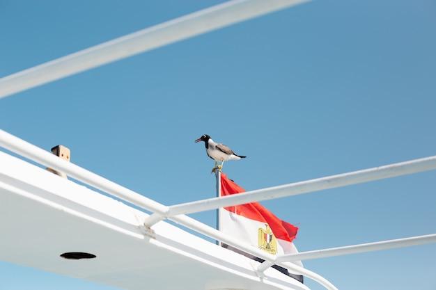 Un bellissimo gabbiano siede sulla bandiera dell'egitto