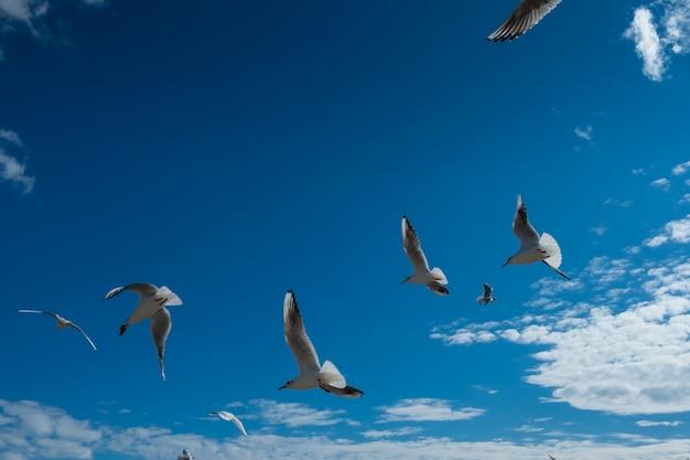 Bei gabbiani che volano nel cielo blu di caduta