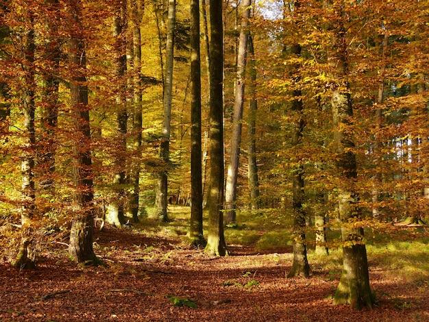 Bellissimo scatto di una foresta autunnale con molti alberi