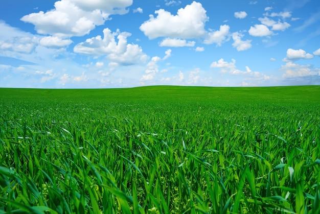 Bella ripresa di un lussureggiante campo di erba fresca sotto un luminoso cielo nuvoloso