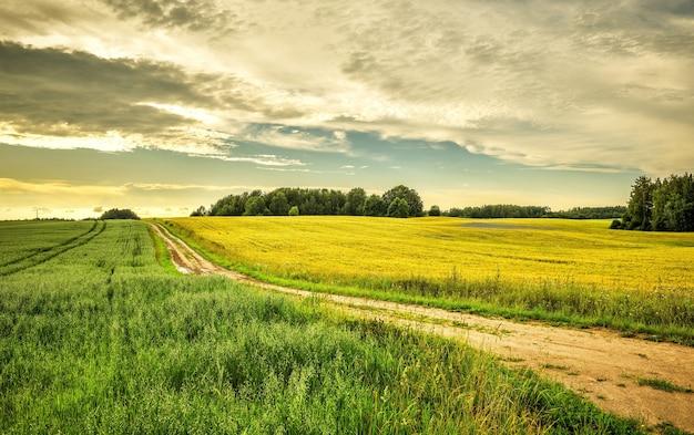 Bello scatto di un sentiero attraverso un prato verde con una luminosa giornata di sole