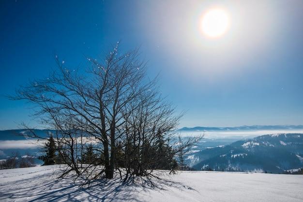 Bellissimi abeti snelli crescono tra cumuli di neve innevati su una collina contro il cielo blu e la luna luminosa in una gelida notte invernale. concetto di riposo fuori città in inverno
