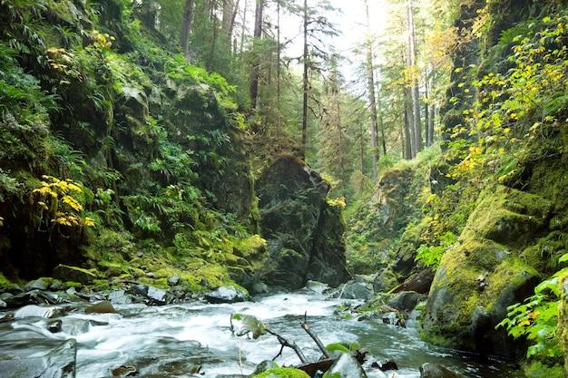 Bellissimo piccolo fiume nella foresta Foto Premium