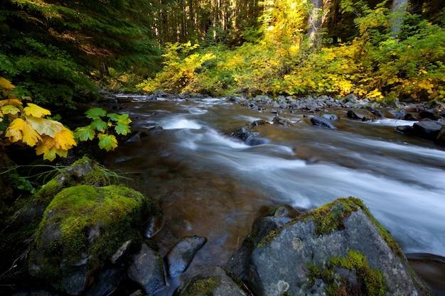 Bellissimo piccolo fiume nella foresta