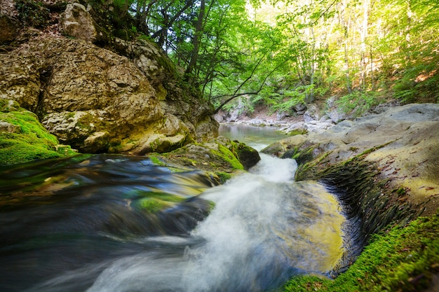 Bellissimo piccolo fiume nella foresta verde