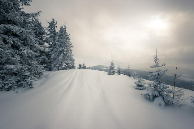 Bellissimo pendio innevato con abeti coperti di neve stanno contro il cielo blu in una soleggiata giornata invernale