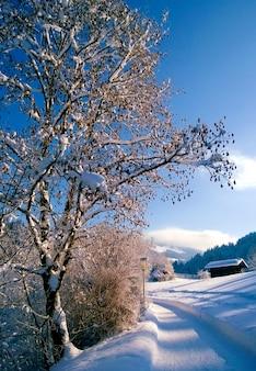 Bella neve in estate
